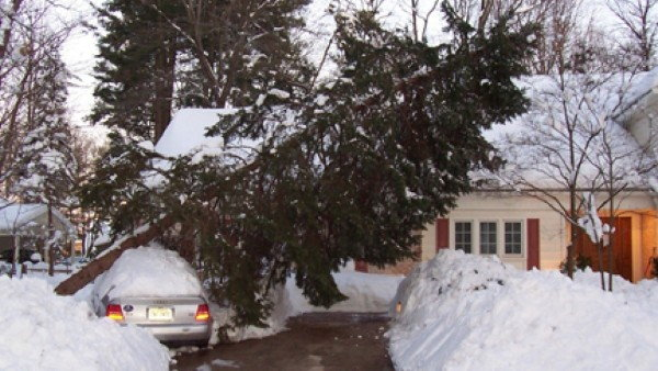 Avoid Winter Tree Damage